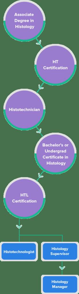 histology-career